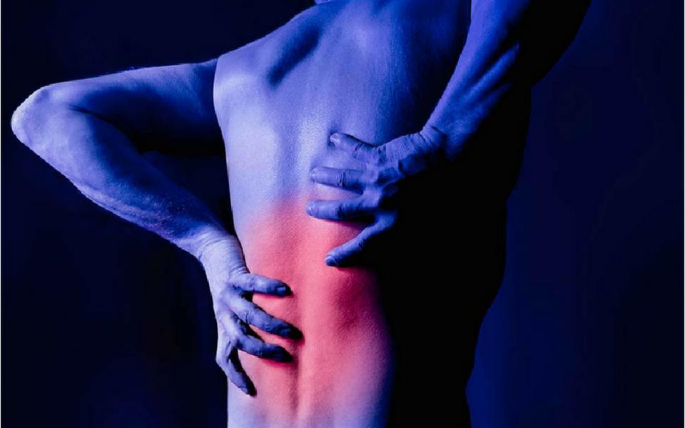 cat back pain symptoms